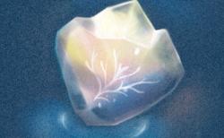 氷の中の木